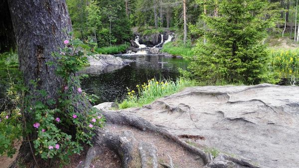 Ахинкоски: тихие зори на бешеной реке